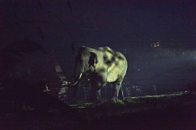INDIA - WILDLIFE - ELEPHANT